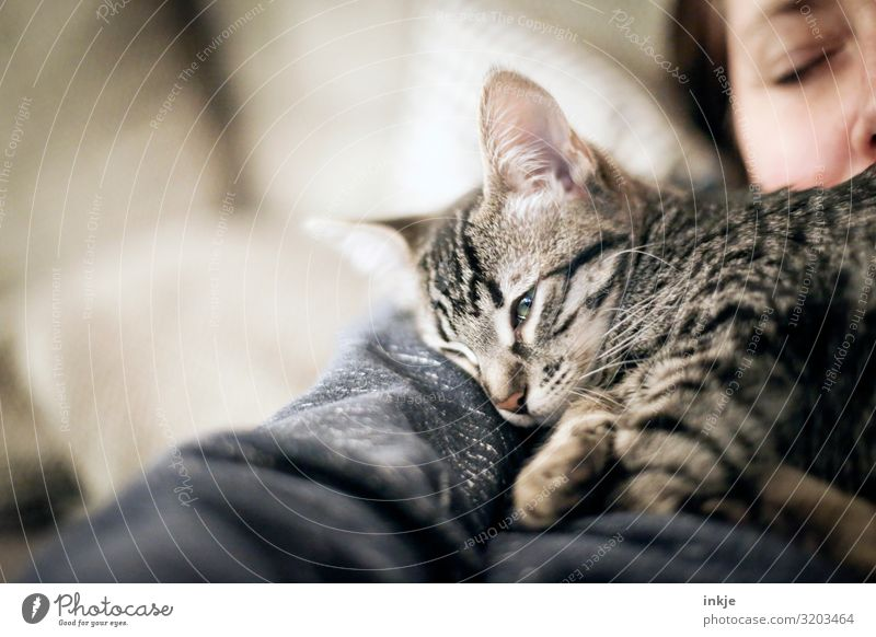 tired Lifestyle Leisure and hobbies Living or residing Feminine Woman Adults Face 1 Human being Pet Cat Kitten Animal Baby animal Lie Sleep Authentic Cuddly