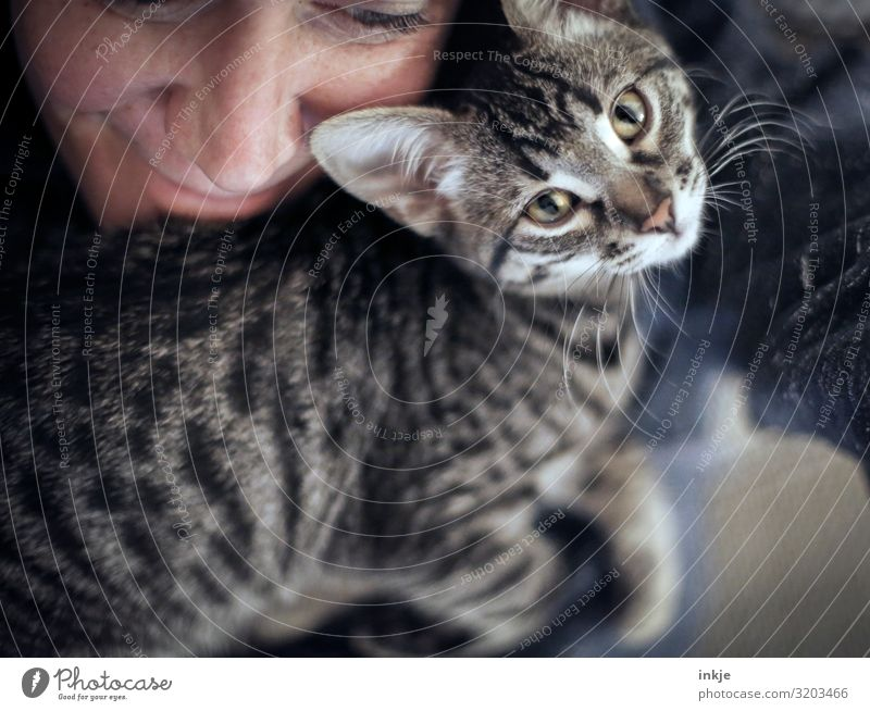 proximity Lifestyle Leisure and hobbies Living or residing Feminine Face 1 Human being Animal Cat Animal face Baby animal Smiling Looking Cuddly Near Cute