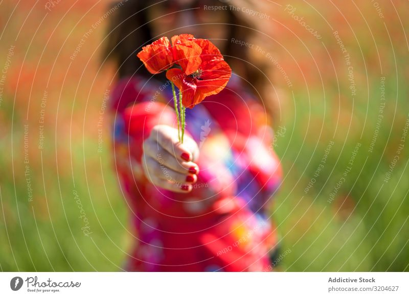Blurred woman giving flower to camera Woman Poppy poppies Flower Field Summer Sunbeam Day Lifestyle Leisure and hobbies Blossom Red Blossom leave Meadow Rest