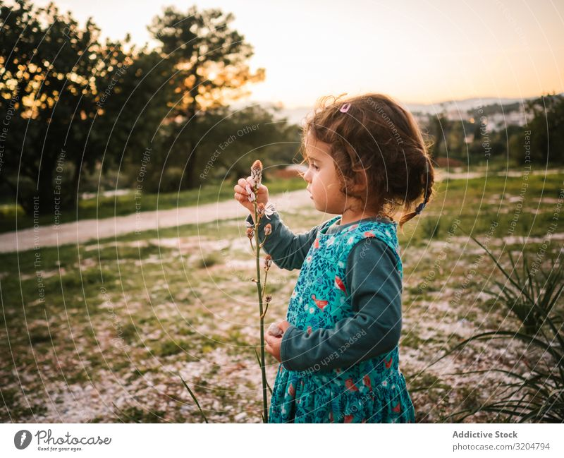 Cute little girl studying flower in park Girl Flower Park Study Delightful Looking rapt attention Focus on Toddler Sunset astonished Beautiful Child Nature