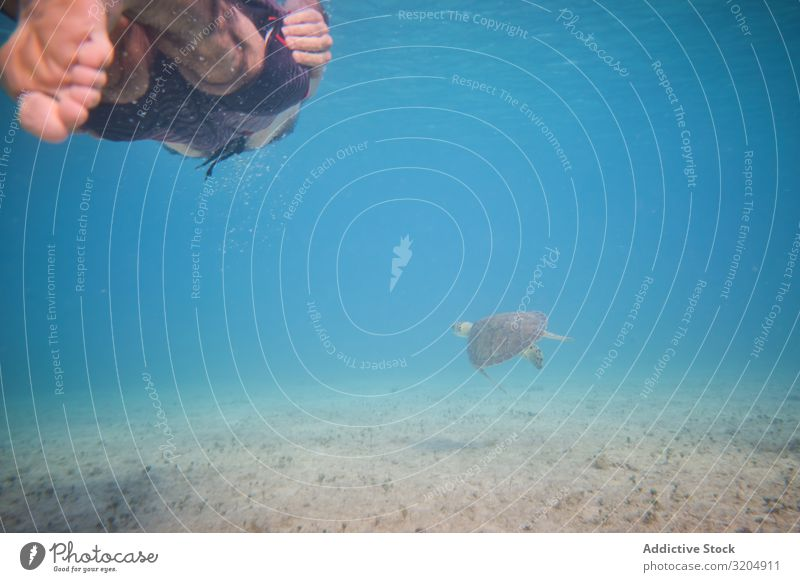 Diver swimming near turtle on depth Turtle Delightful Beautiful Inspiration Turquoise Natural Swimming Action Water Nature Ocean Clear Under Bottom marine