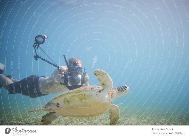 Diver taking photo of big water turtle on depth Turtle Delightful Beautiful Inspiration Turquoise Photography Natural Swimming Action Water Nature Ocean Clear