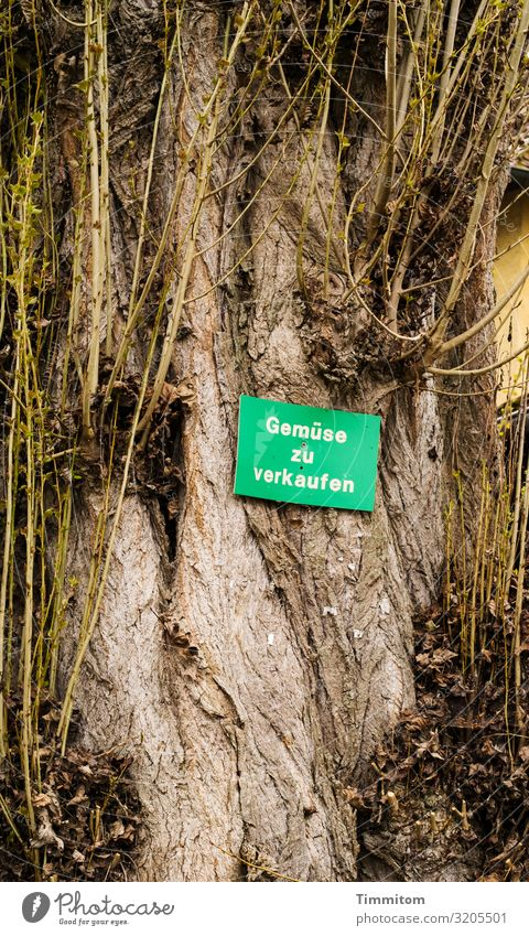 AST 7 | Strange seller Food Vegetable Nutrition Plant Tree Lake Constance Wood Signs and labeling Signage Warning sign Brown Yellow Green Emotions farm shop