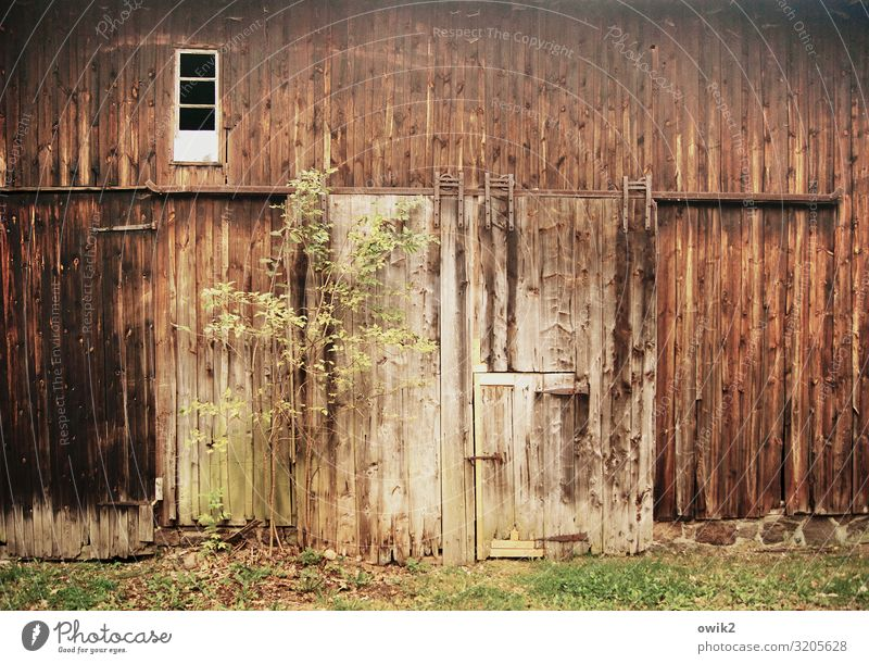 door and gate Tree Grass Building Barn Barn door Window Door Wooden wall Old Historic Past Transience Ravages of time Weathered Sliding gate Colour photo