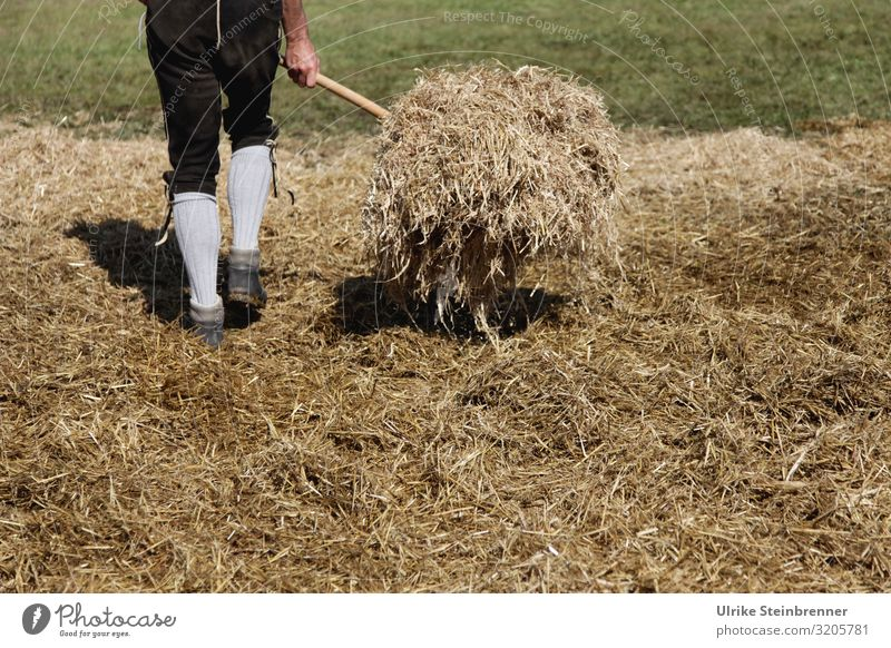 Human tedder Human being Masculine Young man Youth (Young adults) Man Adults Life Legs 1 18 - 30 years 30 - 45 years Environment Nature Landscape Autumn Grass