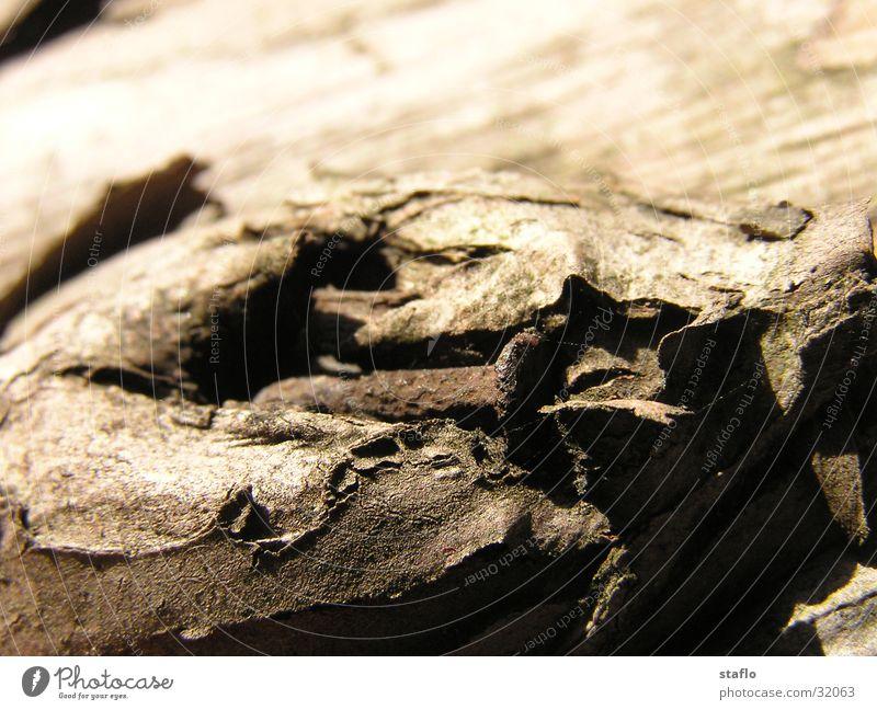 Sun Branch Rust Nail