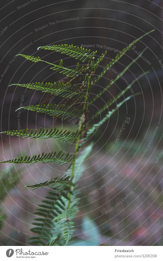 fern leaf Nature Plant Autumn Fern Foliage plant Wild plant Forest Breathe Movement Relaxation Going Walking Faded To dry up Growth Hiking Elegant Exotic Free