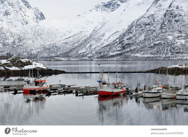 Fishingboats-floating pontoon. Sildpolltjonna-Lofoten-Norway-130 Vacation & Travel Nature Plant Blue Beautiful Green Water White Landscape Red Tree Ocean