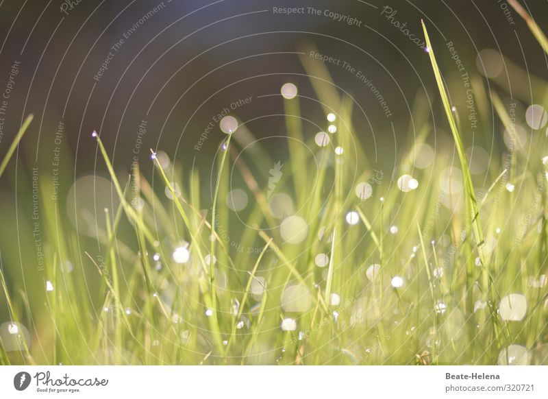 It brightens up - summer is coming Nature Plant Grass Meadow Illuminate Esthetic Fresh Beautiful Green Joy Loyal Glittering Dew Drops of water Colour photo