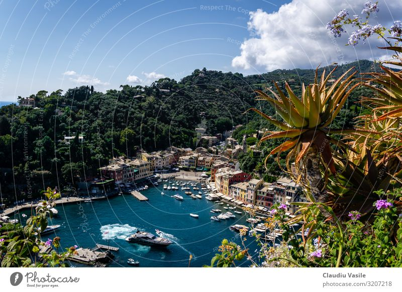 Portofino, viewed from Castle Brown Vacation & Travel Tourism Trip Sightseeing Summer Summer vacation Sun Plant Agave Boating trip Yacht Sailboat Harbour Rich