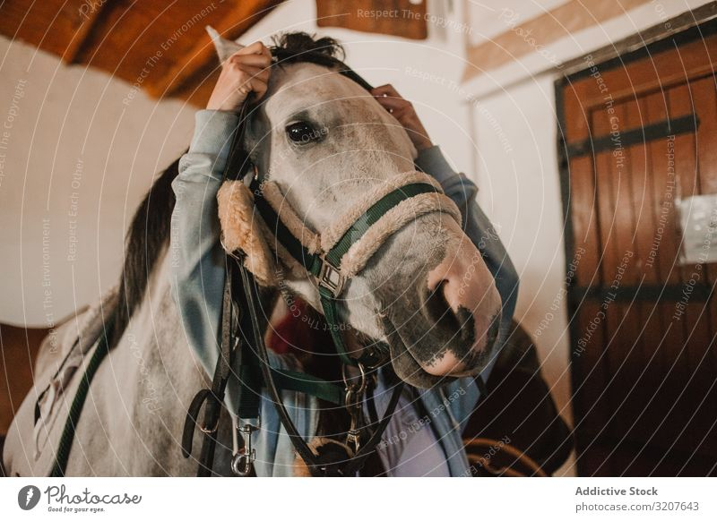 White horse in ranch stable grooming harness farm animal bridle rural sport saddle purebred equestrian pet white care tranquil prepare protection caress mammal