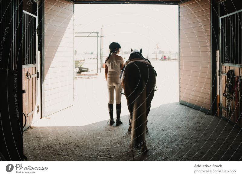 Jockey leading horse out of stable woman jockey casual ready farm care animal rider barn mammal active activity professional saddle bridle sport harness walking