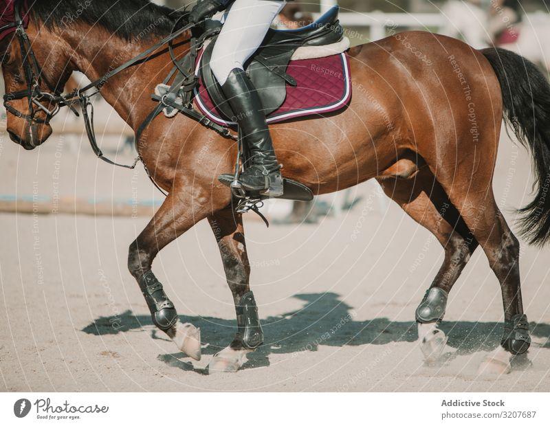 Crop jockey riding horse in sunlight rider motion equestrian animal speed track training race racetrack horseback equine breed action chestnut summer practice