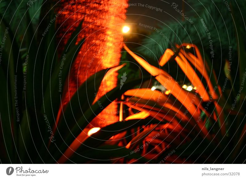 Green Red Colour Lamp Palm tree Dubai United Arab Emirates Near and Middle East