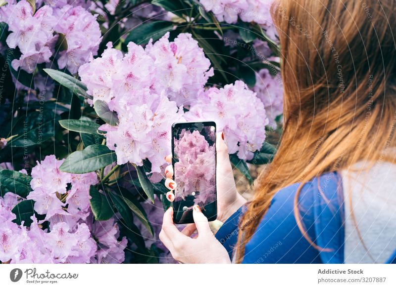 Woman picturing blooming flowers woman taking photo garden picture smartphone travel scotland summer camera technology spring pink tender gentle photography