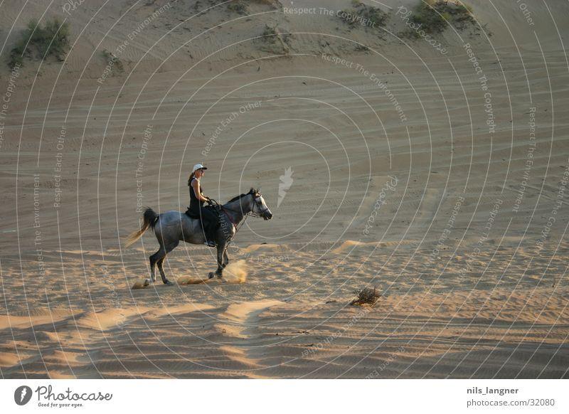 the desert lives Horse Dubai Arabien Rider Desert Sand