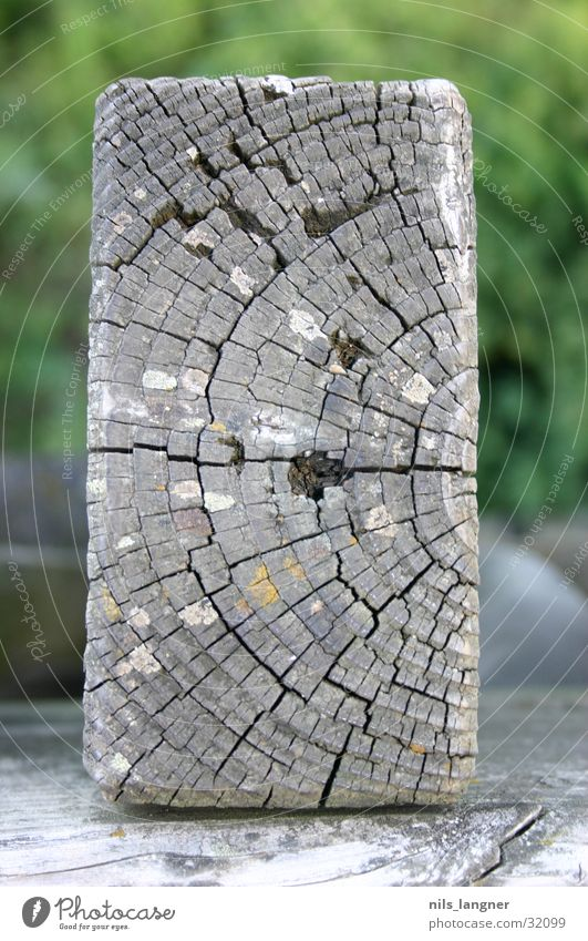 Wood Brown Wooden board Freiburg im Breisgau Sea park