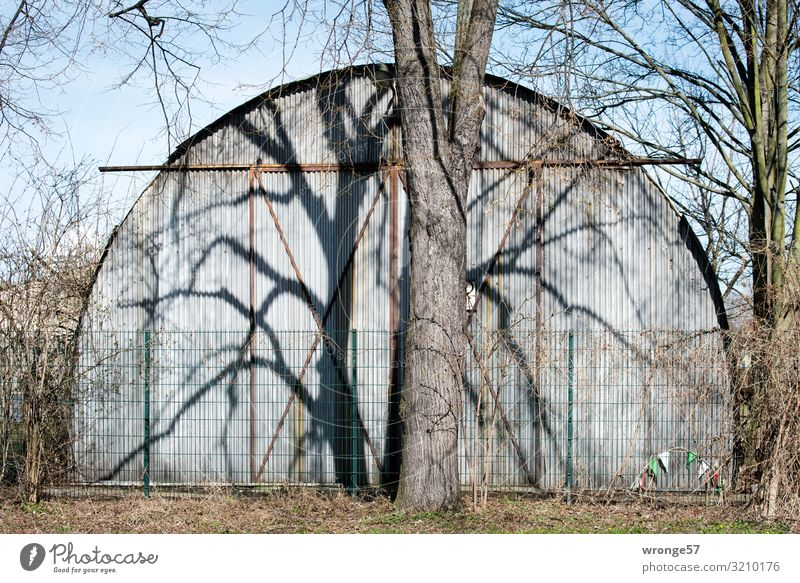 Tree casts its shadow on a corrugated iron hall at the roadside Tree trunk Bleak leafless Shadow shadow cast Deserted Exterior shot Colour photo Day Winter