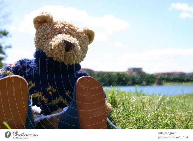 Lino on tour 2 Teddy bear Park Meadow Footwear Honey Man lino Sun Wuschel bear