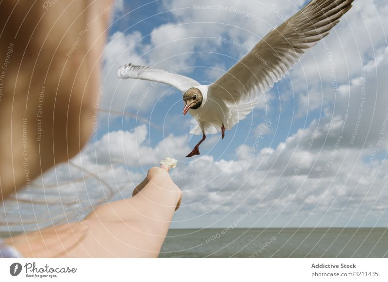 Girl feeding seagull on coast girl offer bread sky piece bird give crumbs seashore seaside kind sunny nida lithuania daylight white ocean young vacation travel