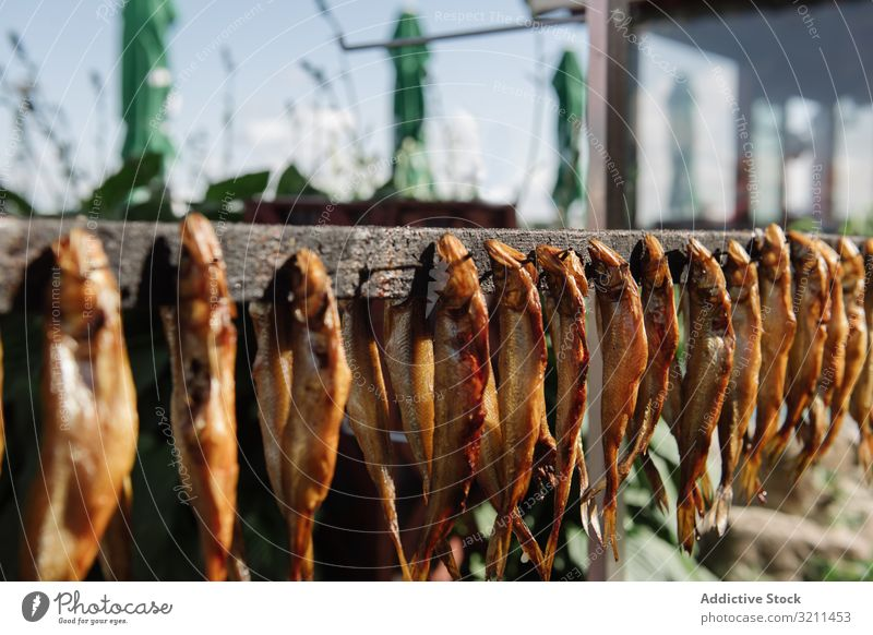 Row of smoked fish on wooden rail row market sun strip nida lithuania attached nails various seafood dried eviscerated fresh industry product gastronomy protein