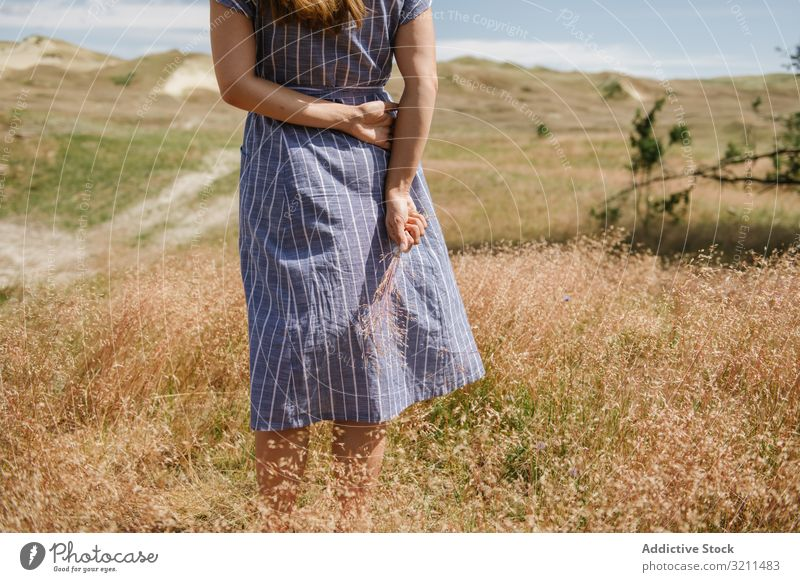 Young woman gathering dried spikes field grass countryside gold dress wisp stand freedom sunshine summer rural nida lithuania farmland enjoyment young adult