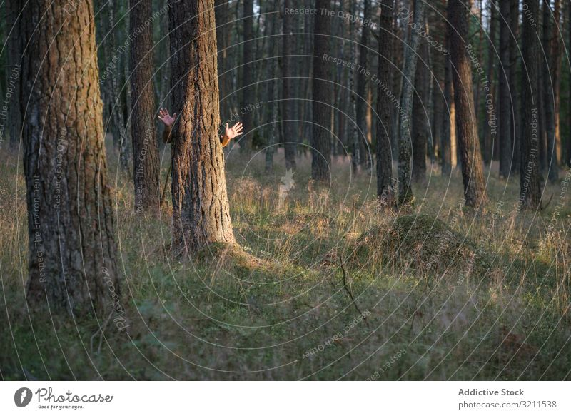 Anonymous man hiding behind pine tree waving hands while standing in forest hide palm salute communication summer nature landscape creative countryside covered
