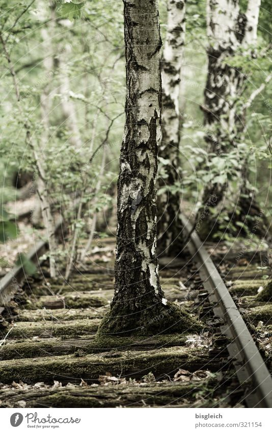 reconquest Tree Birch tree Birch wood Park Berlin Federal eagle Europe Deserted Rail transport Railroad tracks Wood Metal Old Dream Brown Green Serene Patient