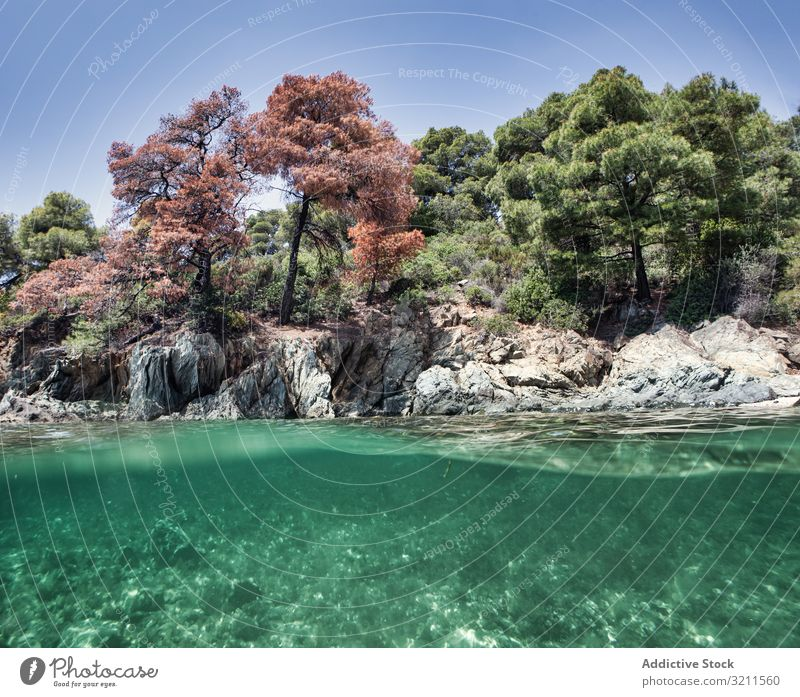 Stony island with bright greenery surrounded by water underwater sea bottom rocky formation nature summer halkidiki greece turquoise blue environment aquatic