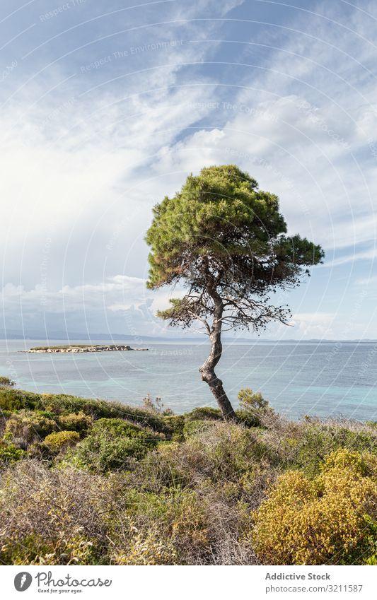 Green tree on picturesque coastline seascape lush water horizon landscape greece halkidiki cloud crown tourism scene nature paradise freedom travel summer blue