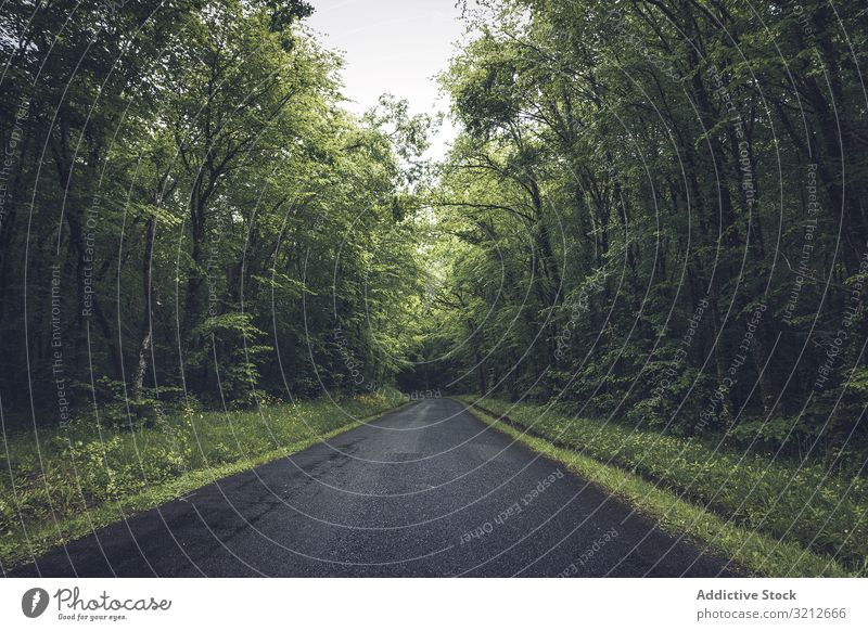 Empty road in dense green forest empty park nature landscape asphalt nobody rural travel tree trip way scene freeway natural day wood beautiful journey scenic