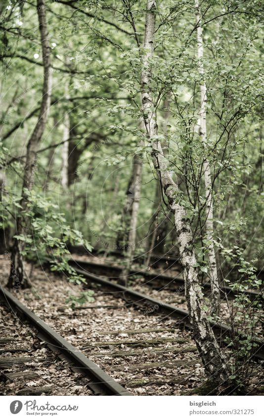 Reconquest II Environment Nature Tree Birch tree Birch wood Forest Berlin Germany Europe Railroad tracks Wood Metal Old Brown Green Decline