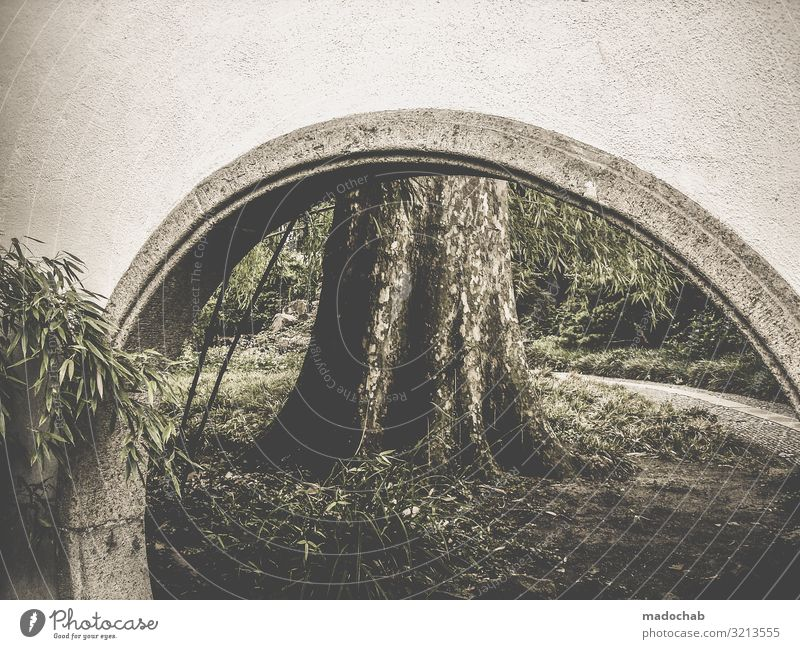 Archway in front of a tree trunk Tree trunk Nature bridge Goal Contrast Environment Bamboo Chinese Garden Park Landscape Deserted Exterior shot Plant