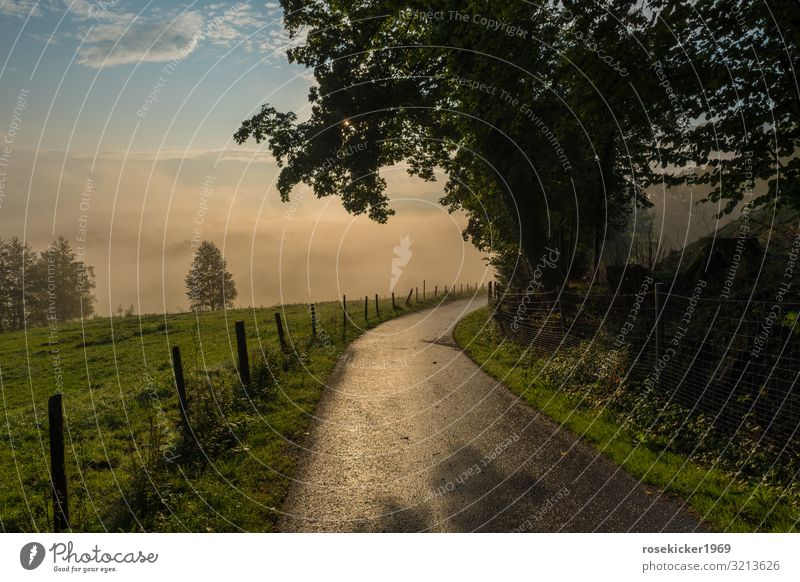 Morning walk in the fog Nature Landscape Sunrise Sunset Summer Fog Tree Field Alps Deserted Lanes & trails Relaxation Going To enjoy Walking Happy Authentic