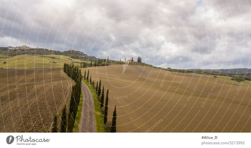 Tuscany cypress avenue landscape Italy Vacation & Travel Nature Authentic Exceptional Fantastic Far-off places Natural Brown Bizarre Loneliness Relaxation