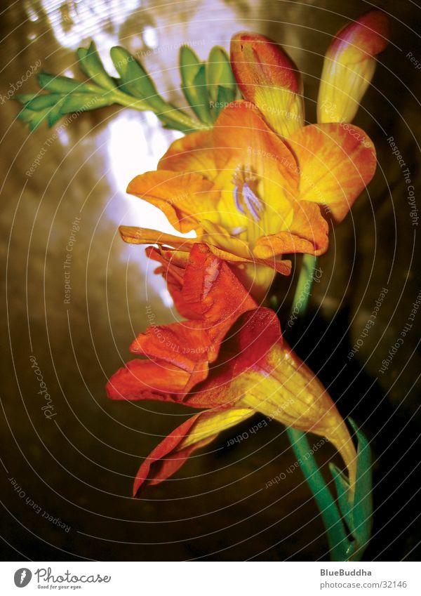 Beautiful Flower Yellow Style Blossom Orange Harmonious Brass