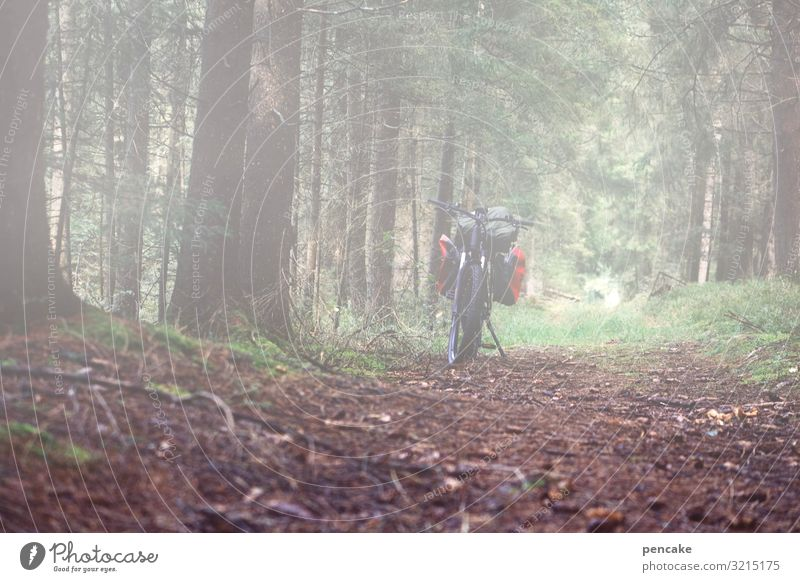 blurred, fuzzy. Nature Landscape Elements Earth Autumn Fog Forest Lanes & trails Bicycle Mobility e-bike Electric eMobility Break Trip Cycling tour Bicycle rack