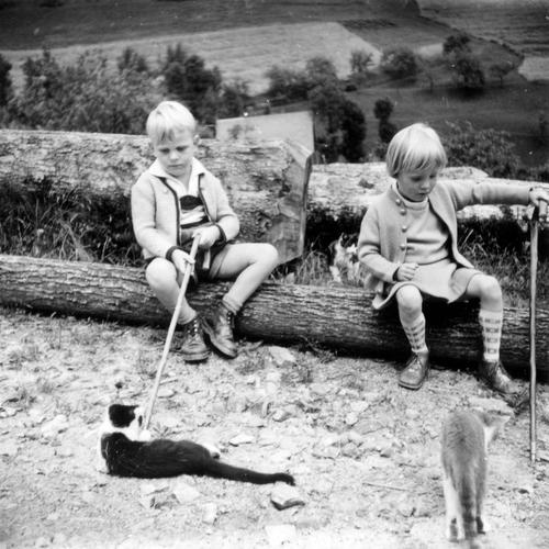 game manual Masculine Feminine girl Boy (child) 2 Human being Landscape Tree trunk Stick Animal Pet Cat Observe Going Lie Looking Sit Playing Love of animals