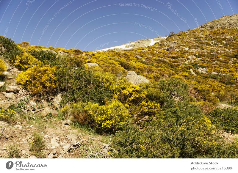 Picturesque landscape of green mountains in summer forest nature picturesque scenic environment hill wild rocky hiking altitude botany flora blue sky
