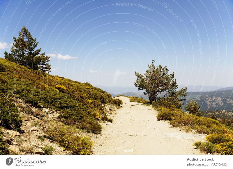 Picturesque view of dirt path on green hills picturesque beautiful flower blue cloudless sky nature landscape scenic scenery meadow idyllic blossom blooming