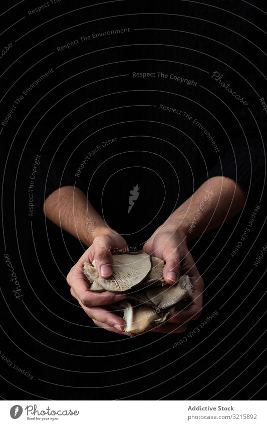 White mushrooms in hands on black background growing gathered plant white forest nature food fungus fresh brown natural edible flora organic raw beautiful cap