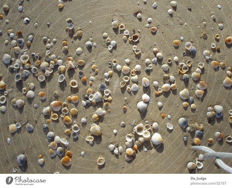 shell beach Mussel Beach Ocean Success Water Sand Sun