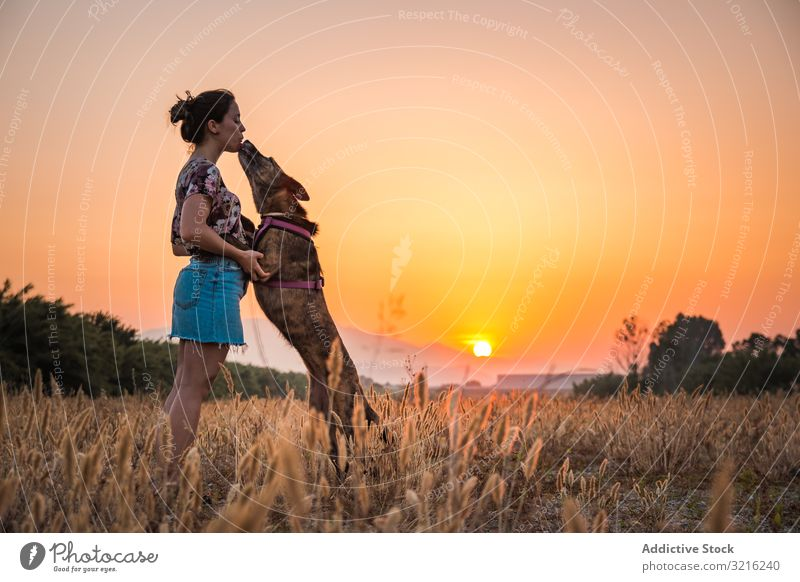 Female playing with dog at hilly area in evening silhouette woman sunset jump train high orange nature wild free treat female field off lead meadow exercise