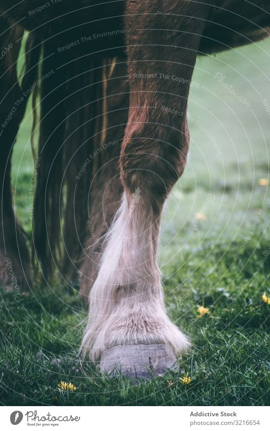 Chestnut horse standing in countryside animal rural ranch equine domestic nature field meadow pasture stallion mare calm creature beast mammal hair harmony
