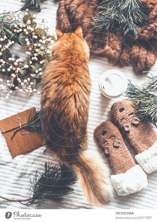 Cat Vacation & Travel Christmas & Advent Joy Winter Lifestyle Living or residing Design Decoration Gift Pet Still Life Stockings Wreath Fir branch