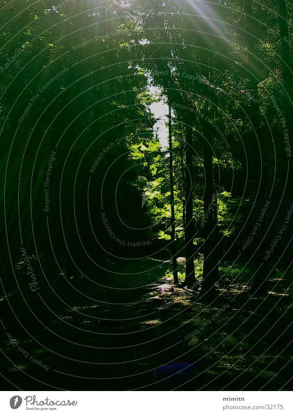 A walk in the woods Tree Forest Sunbeam Green Dark Kopecek Forest Olomouc Moravia Landscape