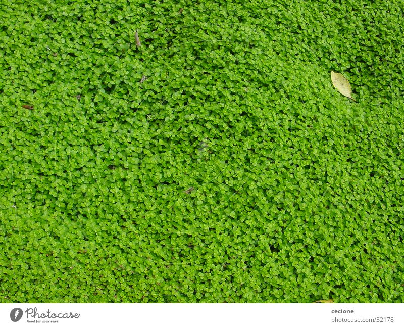 Nature Green Plant Leaf Spring Background picture