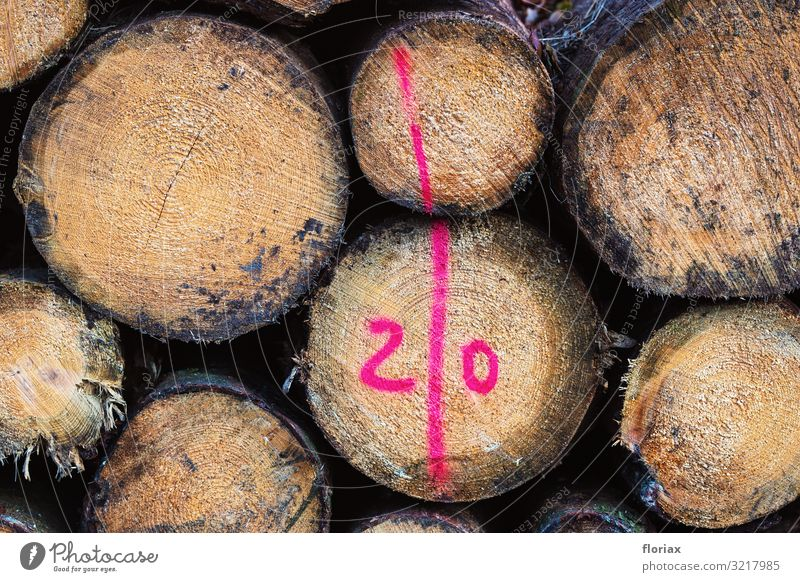 forestry Furniture Work and employment Profession Economy Agriculture Forestry Environment Nature Autumn Plant Tree Wood Sign Characters Digits and numbers