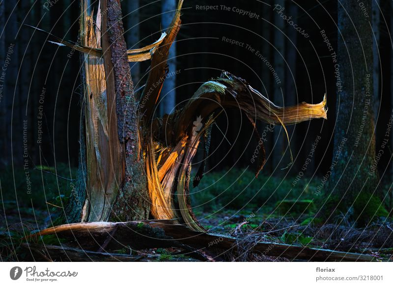 forest elephant Agriculture Forestry Art Work of art Sculpture Environment Nature Landscape Autumn Plant Tree Deserted Wood Illuminate Growth Esthetic Brown