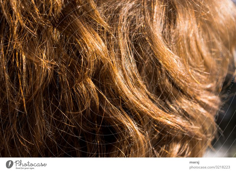 Copper-coloured human hair Human hair Muddled coppery Natural covering Hair and hairstyles Light Glittering luminescent Contrast
